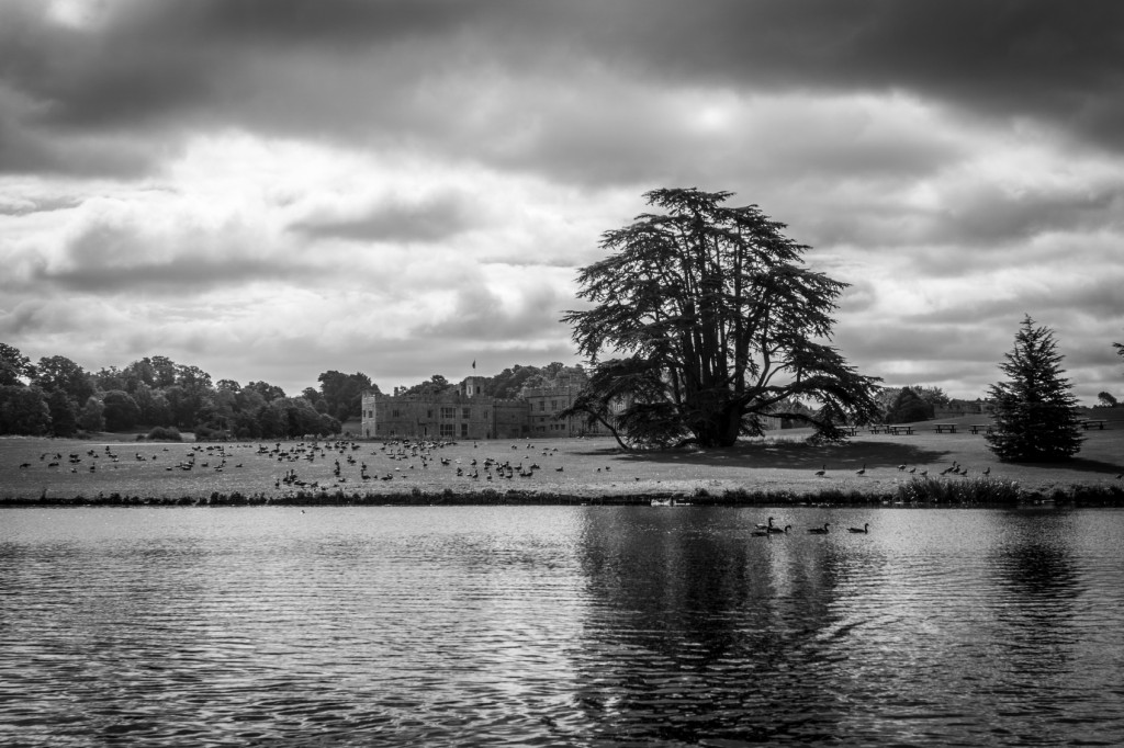 Leeds Castle seen across the lake with a flock of geese on the bank of the lake.